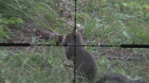 Hunting squirrel with air pistol guns